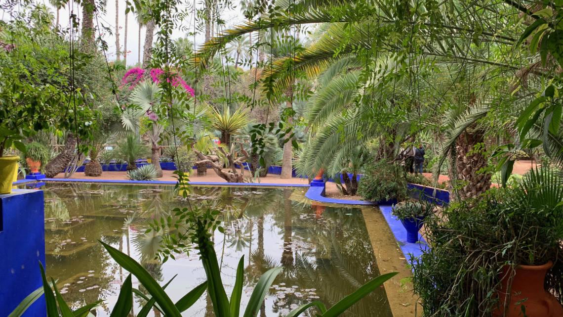 Le jardin est rempli de nombreuses plantes