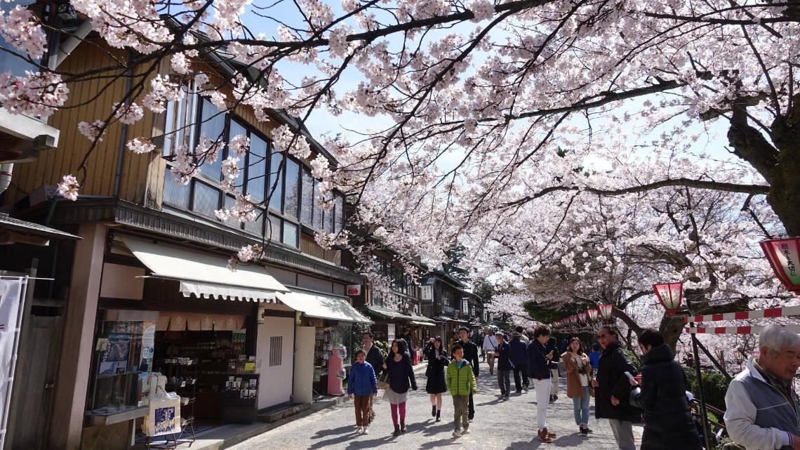 Petites rues de Kanazawa avec des cerisiers en fleurs