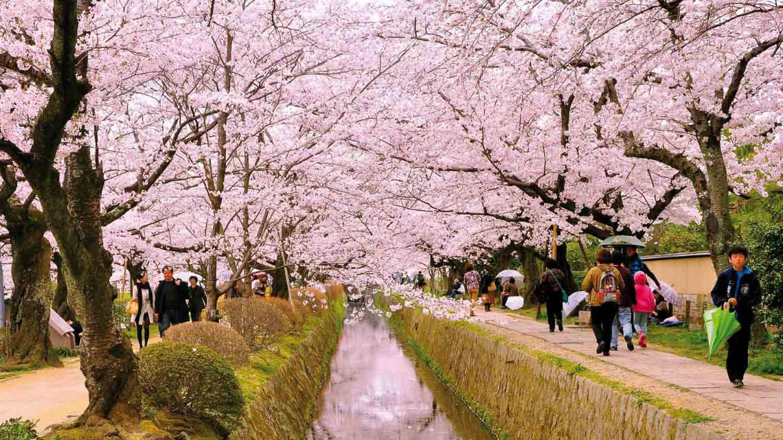 Quand visiter Kyoto ?