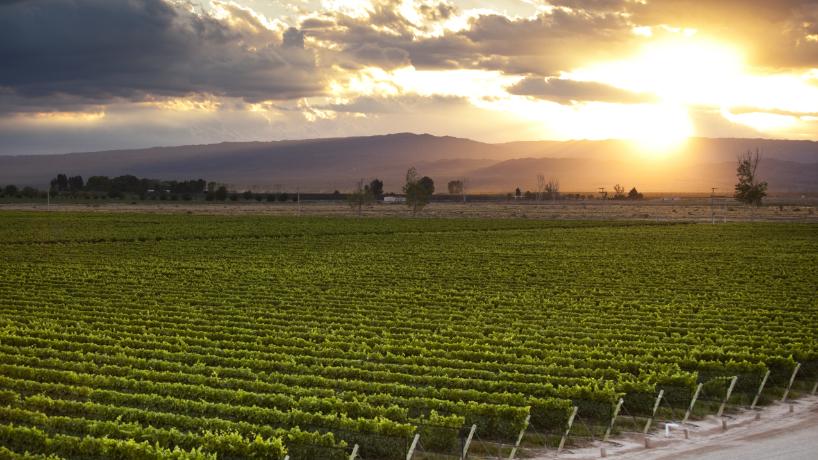 Les routes des vins argentins