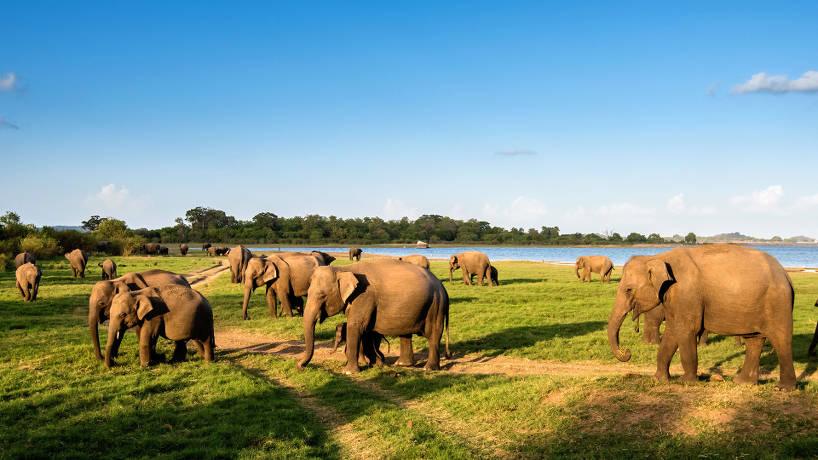 Un séjour au Sri Lanka, une occasion pour voir de nouveaux sites