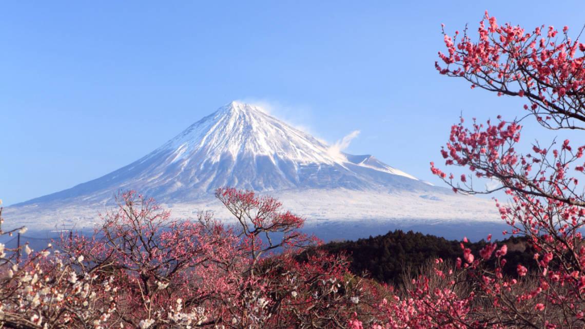Superbe vue sur le Mont Fuji avec cerisiers en fleurs