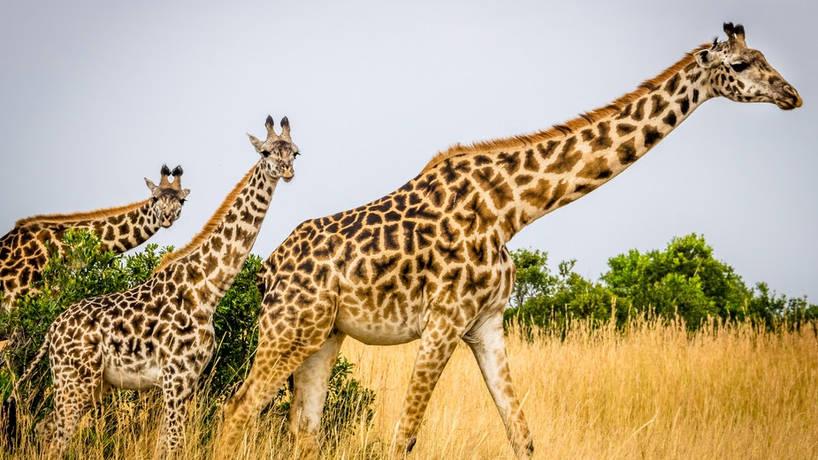 Réaliser un voyage sur mesure au Kenya pour changer de l'ordinaire